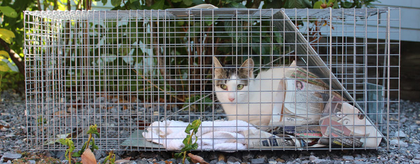 dead animal removal,feral feral Cat trapping,wasp removal service