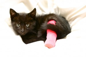 kitten with pink bandage