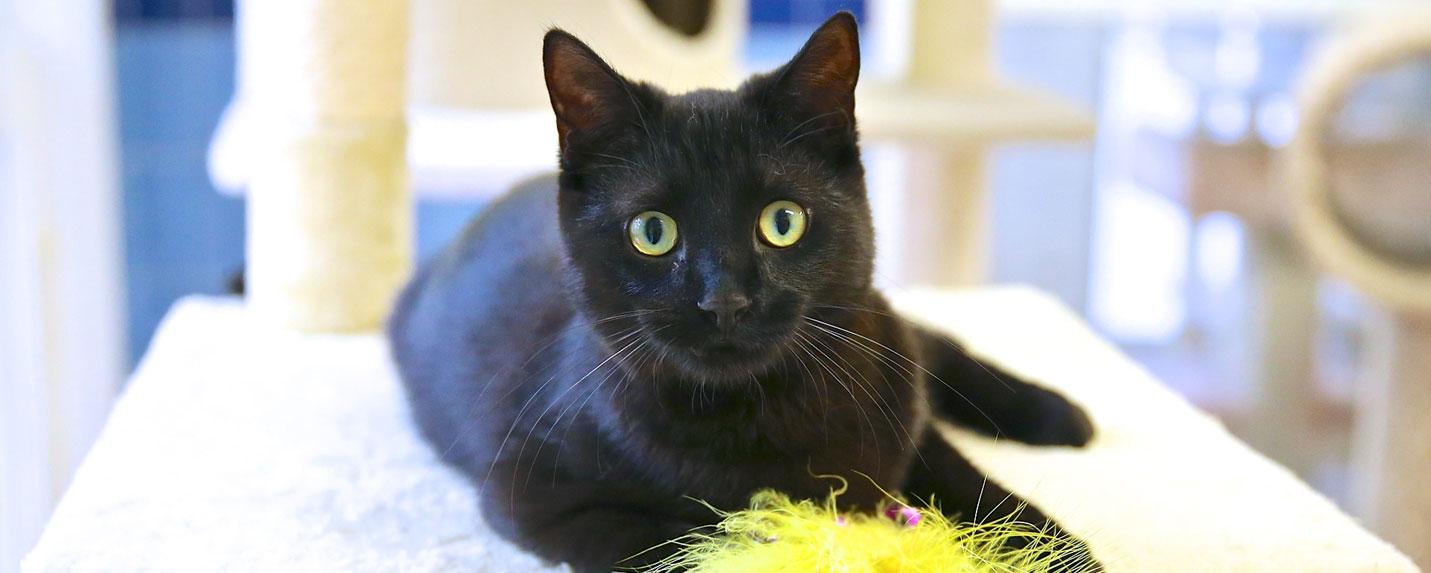 Black-cat-promotion