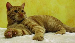 Garfield pet of the week