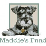maddies_color_3-5in_300dpi-