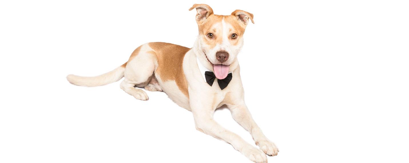 Bow Wow Dog 2016