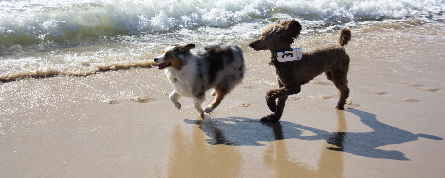 Dog-Walk-homepage-slider-2