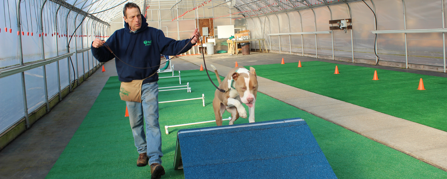 dog-training-indoors-3