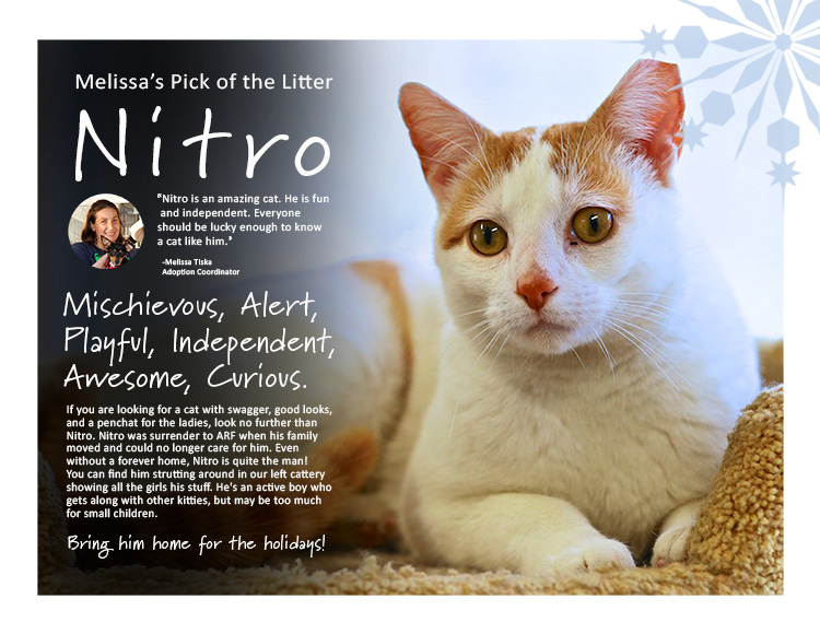 nitro-750
