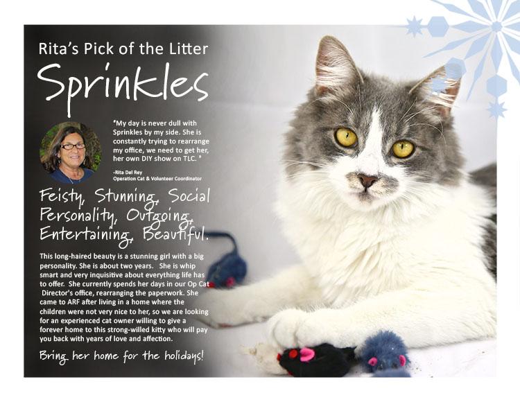 sprinkles-750-2