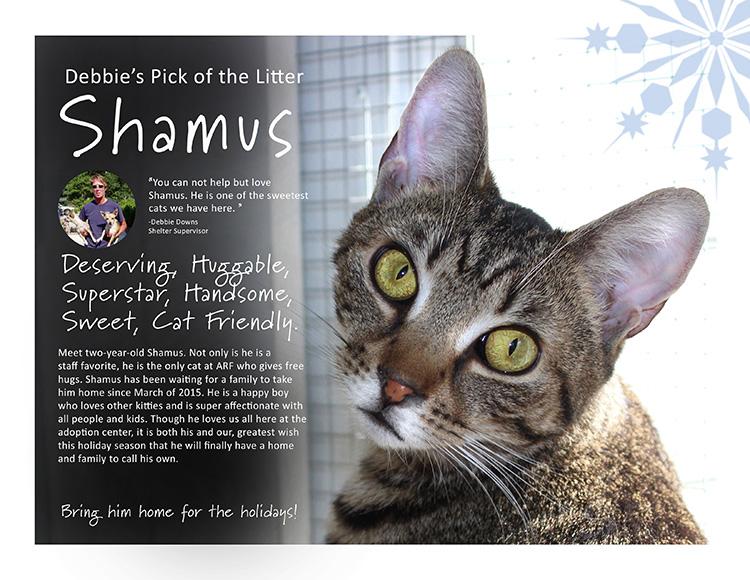 shamus-750